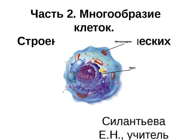 Часть 2. Многообразие клеток. Строение эукариотических клеток Силантьева Е.Н...