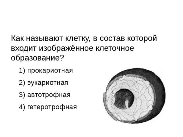 Как называют клетку, в состав которой входит изображённое клеточное образова...