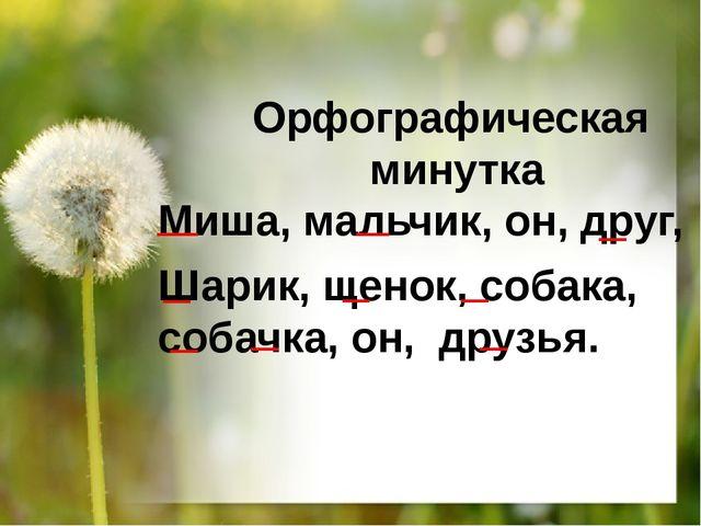 Орфографическая минутка Миша, мальчик, он, друг, Шарик, щенок, собака, собачк...