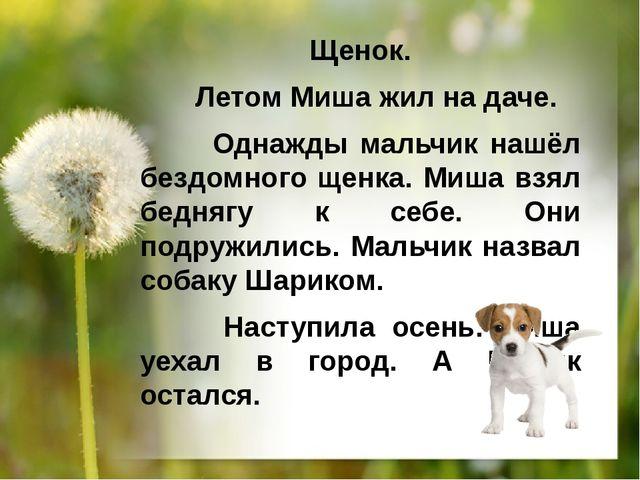 Щенок. Летом Миша жил на даче. Однажды мальчик нашёл бездомного щенка. Миша в...