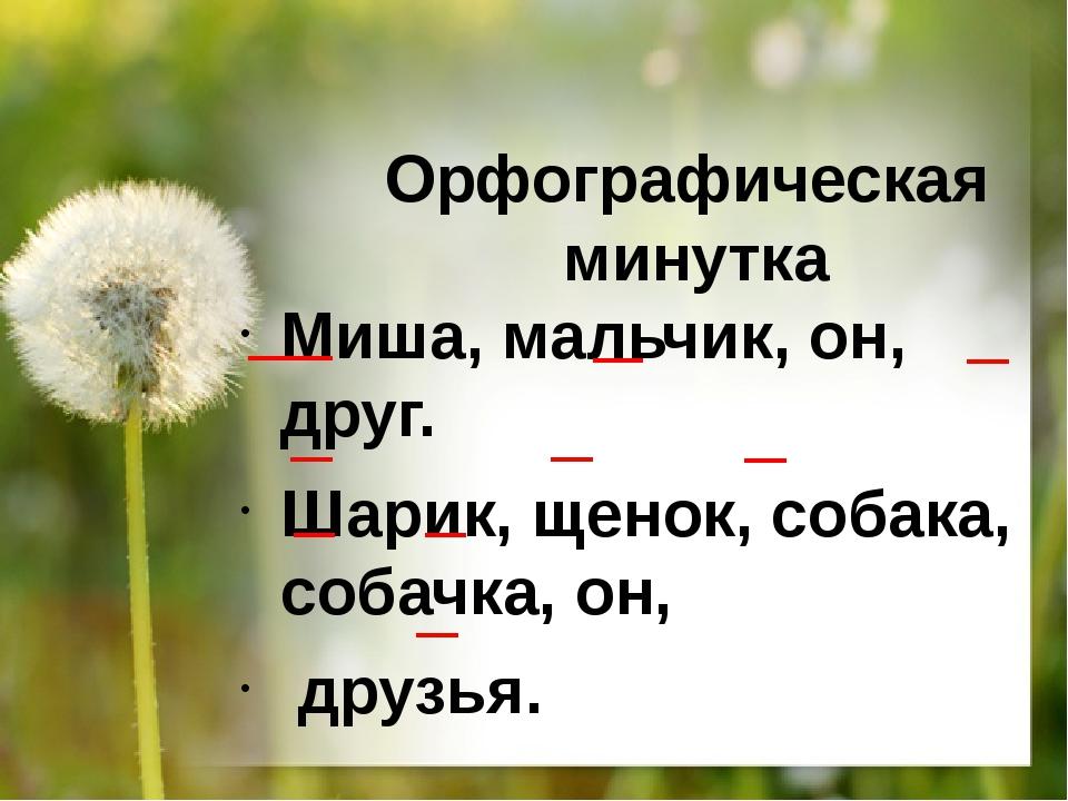 Орфографическая минутка Миша, мальчик, он, друг. Шарик, щенок, собака, собачк...