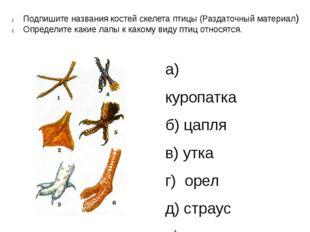 Подпишите названия костей скелета птицы (Раздаточный материал) Определите как