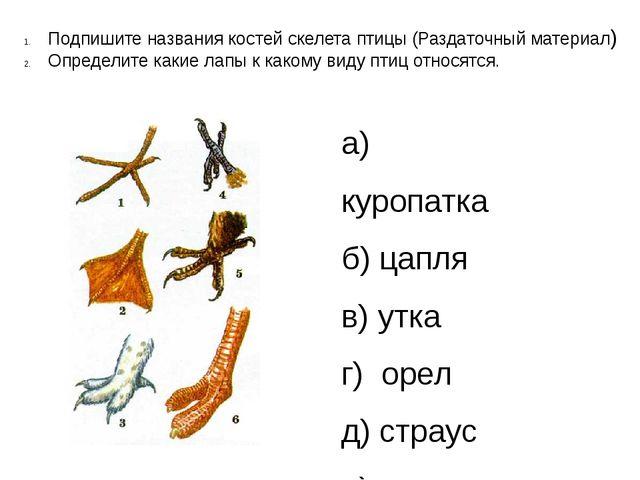 Подпишите названия костей скелета птицы (Раздаточный материал) Определите как...