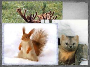 Какие животные водятся в тайге?