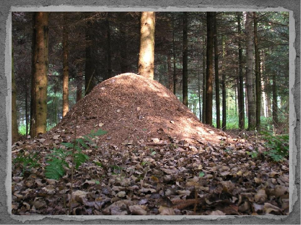Кто в лесу без топоров, строит избы без углов?