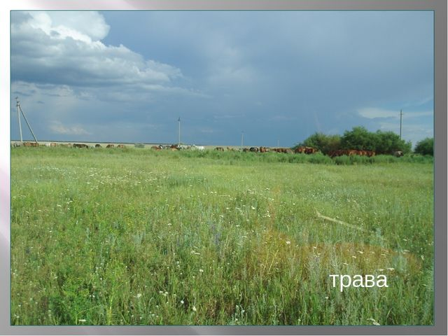 Что не сеяно родится? трава
