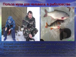 Польза мухи для человека: в рыболовстве В нашей семье ни одна зимняя рыбалка