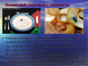 Взаимодействие мухи с человеком: Комнатные мухи – это переносчики болезней, к
