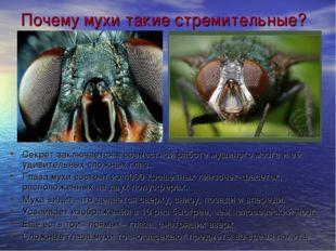 Почему мухи такие стремительные? Секрет заключается в совместной работе мушин