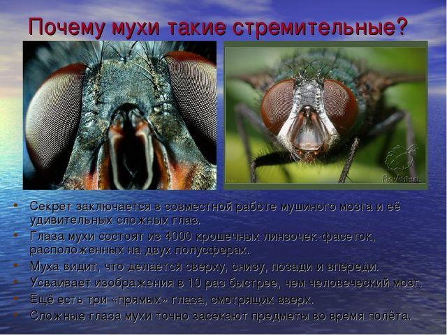 Почему мухи такие стремительные? Секрет заключается в совместной работе мушин...