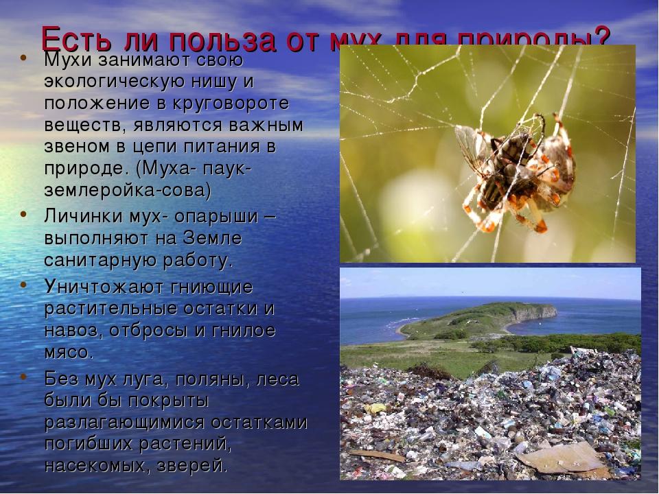 Есть ли польза от мух для природы? Мухи занимают свою экологическую нишу и по...
