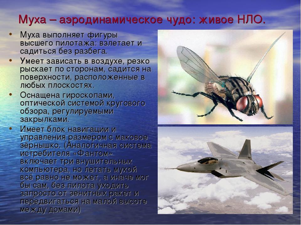 Муха – аэродинамическое чудо: живое НЛО. Муха выполняет фигуры высшего пилота...
