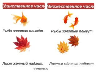 © InfoUrok.ru Рыба золотая плывёт. Рыбы золотые плывут. Лист жёлтый падает. Л