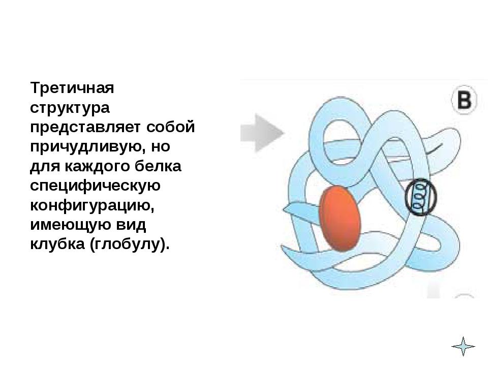 Третичная структура представляет собой причудливую, но для каждого белка сп...