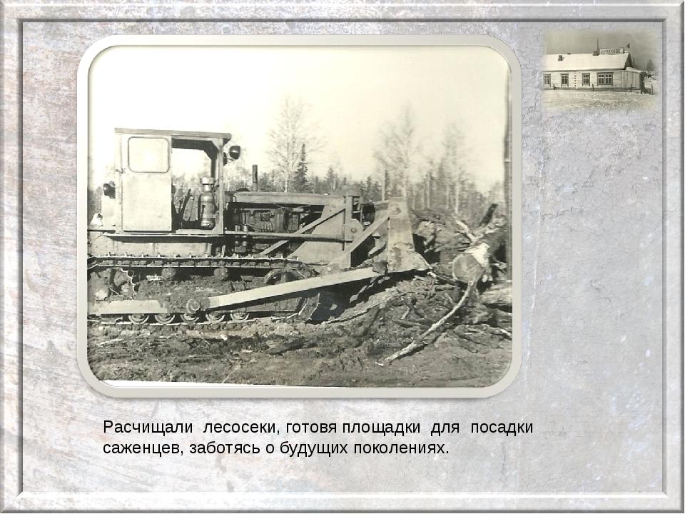 Расчищали лесосеки, готовя площадки для посадки саженцев, заботясь о будущих...