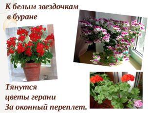 Кбелым звездочкам вбуране Тянутся цветы герани Заоконный переплет.