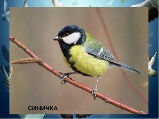 Спинкою зеленовата, Животиком желтовата, Чёрненькая шапочка И полоска шарфика