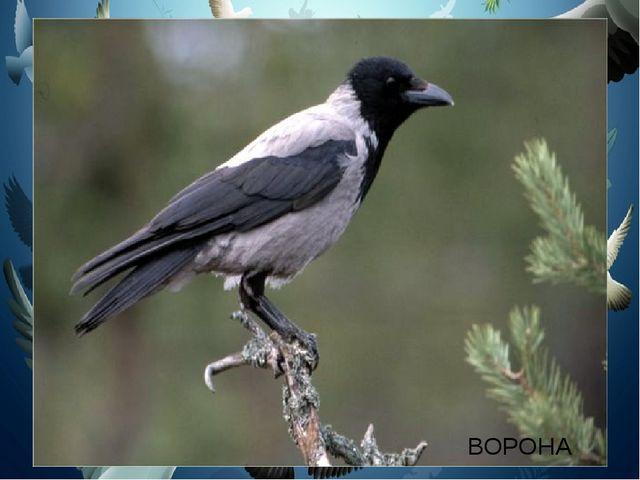 Птица серая парила, Крылья чёрные раскрыла, Громко каркала она, Только курочк...