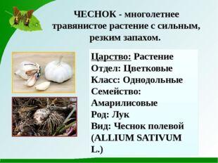 ЧЕСНОК - многолетнее травянистое растение с сильным, резким запахом. Царство: