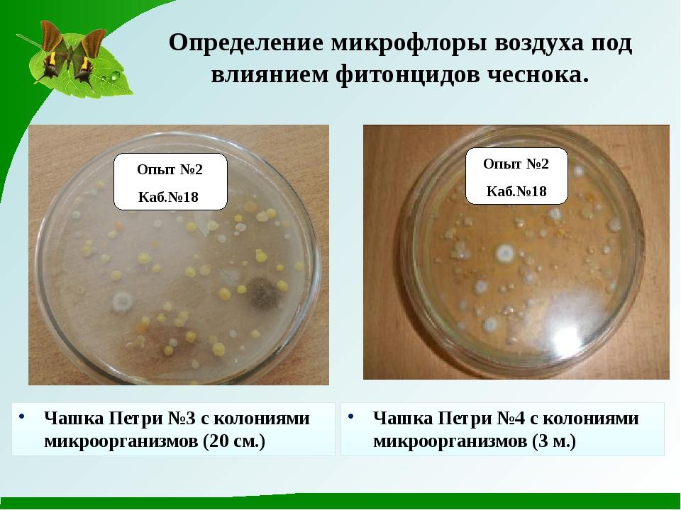 Опыт №2 Каб.№18 Опыт №2 Каб.№18 Определение микрофлоры воздуха под влиянием ф...