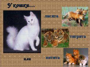 У кошки… котята тигрята лисята или