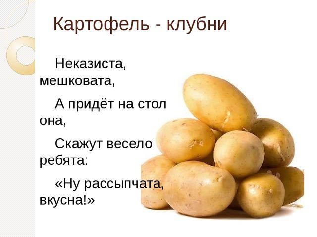 Картофель - клубни Неказиста, мешковата, А придёт на стол она, Скажут весело...
