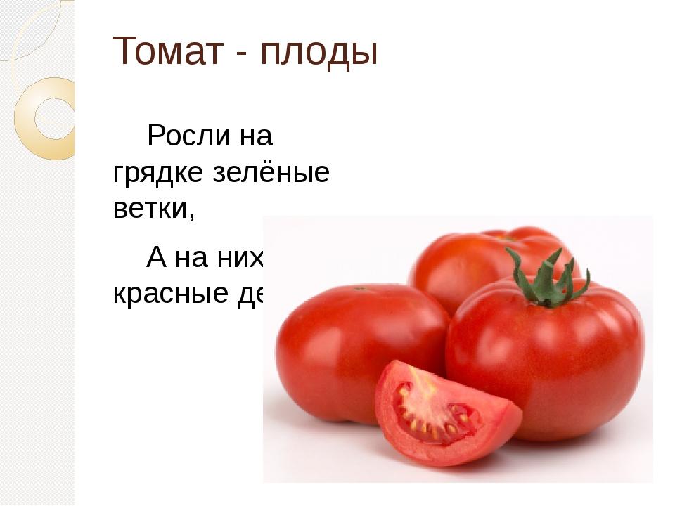Томат - плоды Росли на грядке зелёные ветки, А на них красные детки