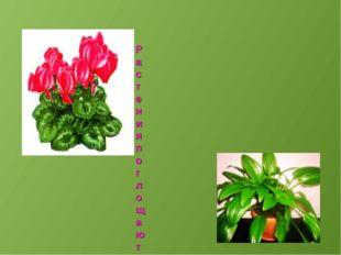 Растения поглощают вредные газы и вещества и выделяют чистый кислород, которы