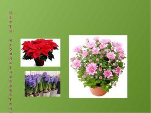 Цветы и комнатные растения поднимают человеку настроение. Мы не можем каждый