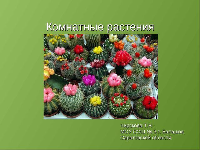 Комнатные растения Чирскова Т.Н. МОУ СОШ № 3 г. Балашов Саратовской области