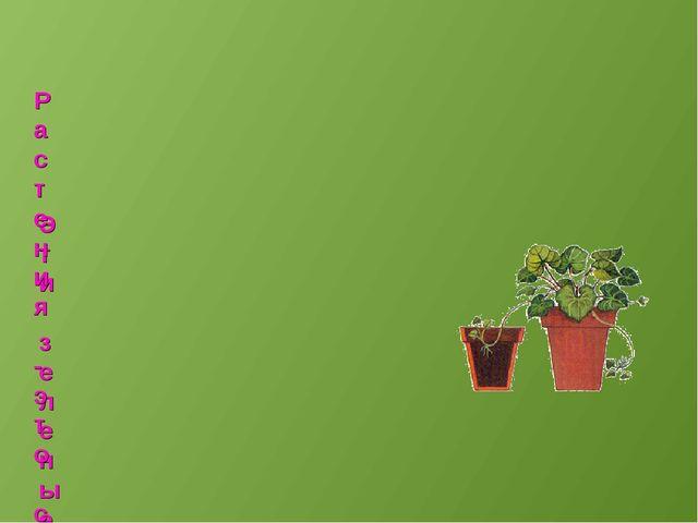 Эти зеленые питомцы отблагодарят вас чистым воздухом, красивыми цветами, лист...