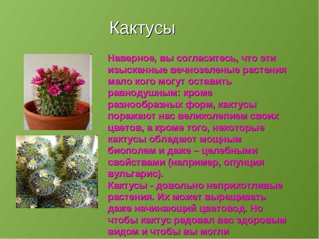 Кактусы Наверное, вы согласитесь, что эти изысканные вечнозеленые растения ма...