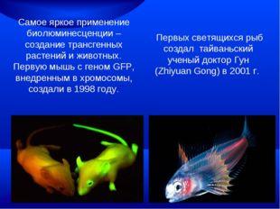 Самое яркое применение биолюминесценции – создание трансгенных растений и жив