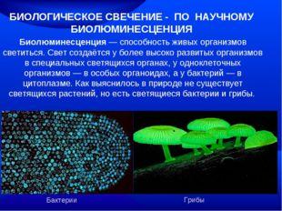 БИОЛОГИЧЕСКОЕ СВЕЧЕНИЕ - ПО НАУЧНОМУ БИОЛЮМИНЕСЦЕНЦИЯ Биолюминесценция— спо