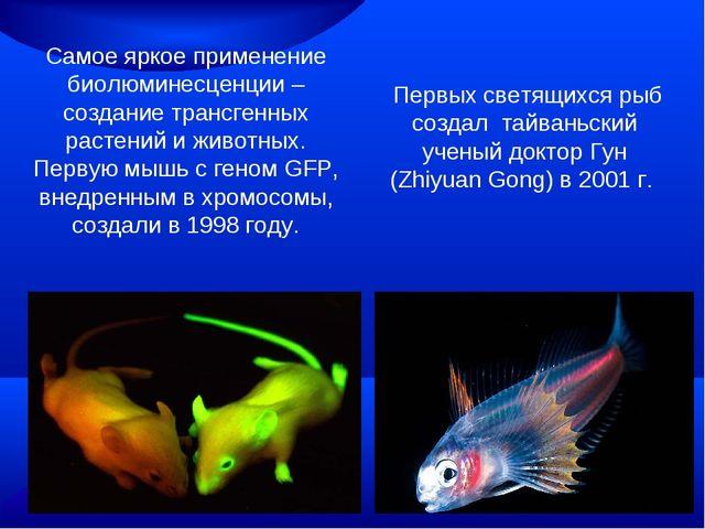 Самое яркое применение биолюминесценции – создание трансгенных растений и жив...