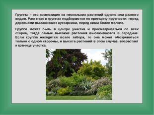 Группы – это композиция из нескольких растений одного или разного видов. Раст