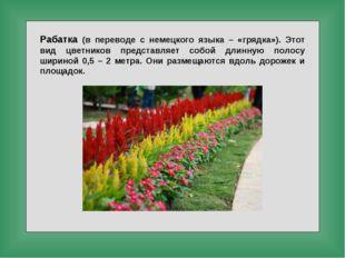 Рабатка (в переводе с немецкого языка – «грядка»). Этот вид цветников предста