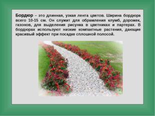 Бордюр – это длинная, узкая лента цветов. Ширина бордюра всего 10-15 см. Он с