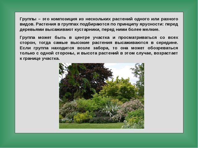 Группы – это композиция из нескольких растений одного или разного видов. Раст...