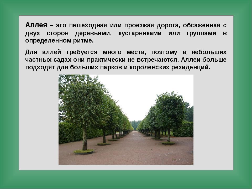 Аллея – это пешеходная или проезжая дорога, обсаженная с двух сторон деревьям...