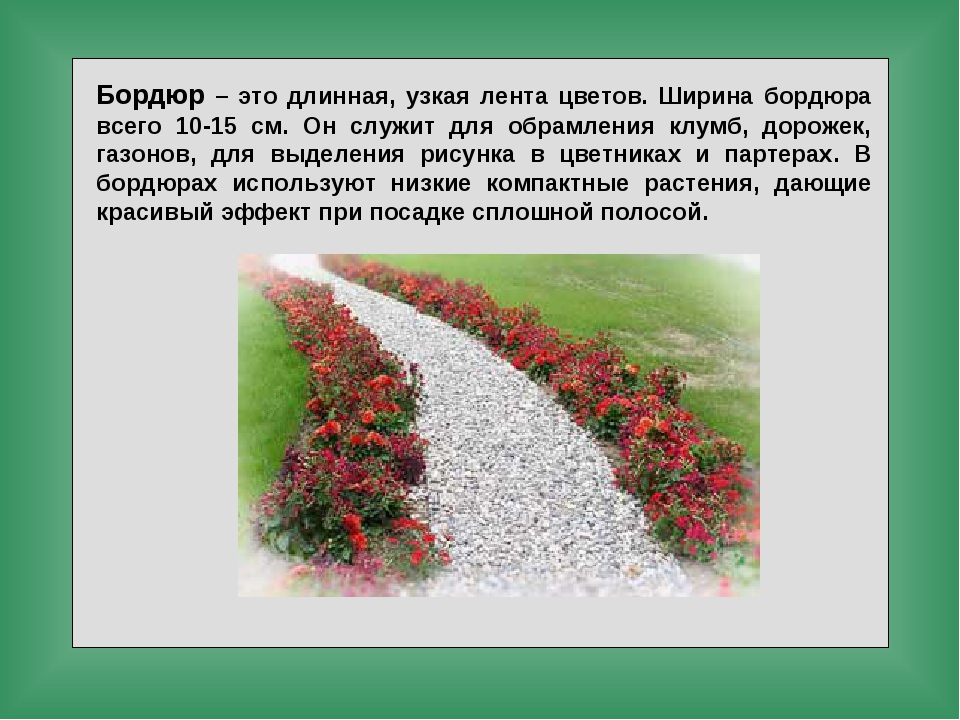 Бордюр – это длинная, узкая лента цветов. Ширина бордюра всего 10-15 см. Он с...
