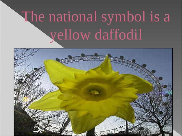 The national symbol is a yellow daffodil