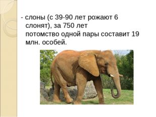 - слоны (с 39-90 лет рожают 6 слонят), за 750 лет потомство одной пары состав