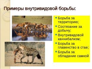 Примеры внутривидовой борьбы: Борьба за территорию; Состязание за добычу; Вну