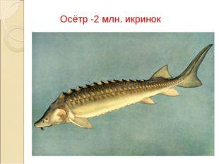 Осётр -2 млн. икринок