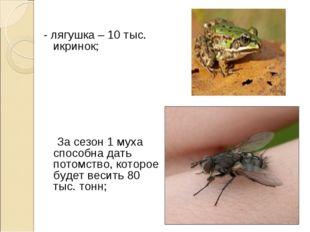- лягушка – 10 тыс. икринок; За сезон 1 муха способна дать потомство, которое
