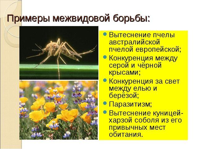 Примеры межвидовой борьбы: Вытеснение пчелы австралийской пчелой европейской;...