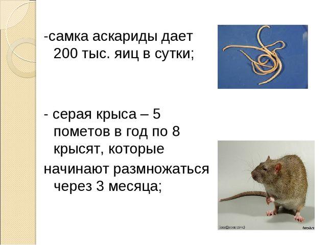 -самка аскариды дает 200 тыс. яиц в сутки; - серая крыса – 5 пометов в год по...