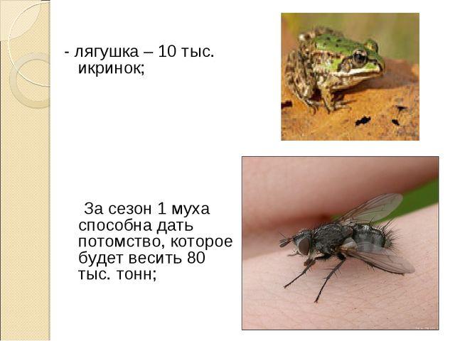 - лягушка – 10 тыс. икринок; За сезон 1 муха способна дать потомство, которое...