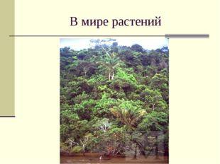 В мире растений